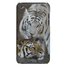 White And Brown Tigers Resting iPod Touch Cover