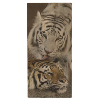 White And Brown Tigers Resting Wood USB 2.0 Flash Drive