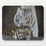 White And Brown Tigers Resting Mouse Pad