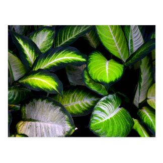 White and Green Leaves Postcard