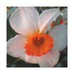 White and Orange Daffodil Acrylic Wrapped Canvas Gallery Wrapped Canvas