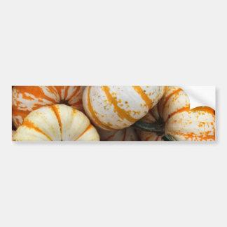 White and Orange Mini Pumpkins Car Bumper Sticker