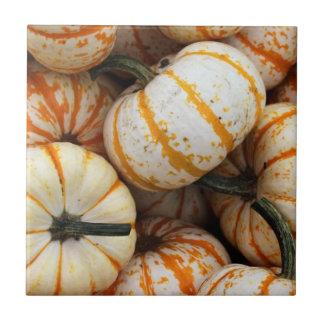 White and Orange Mini Pumpkins Tile