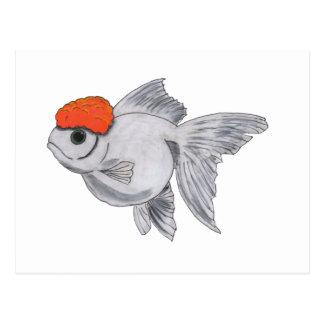 White and Orange Oranda Goldfish Aquarium Pet Fish Postcard