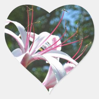 White and pink Bermuda flower Heart Sticker