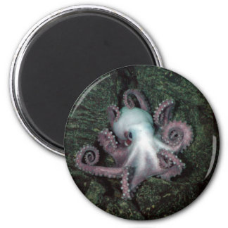 White and Pink Octopus 2 Inch Round Magnet