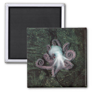 White and Pink Octopus 2 Inch Square Magnet