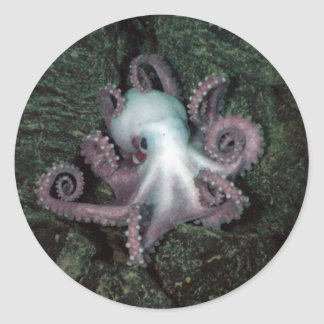 White and Pink Octopus Classic Round Sticker
