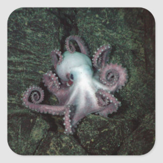 White and Pink Octopus Square Sticker