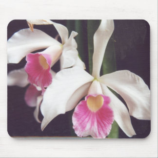 White and Pink Orchids Mouse Pad