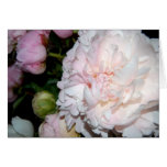 White and pink peonies greeting card