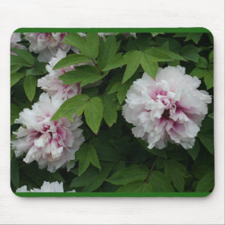 White and Pink Peony Blossoms Mouse Pad