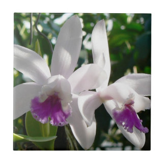 White and pink purple orchids tile