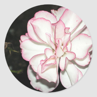 White and Pink Rose Classic Round Sticker