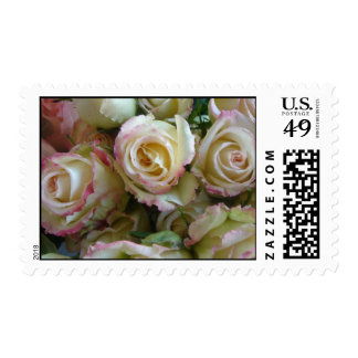 White and pink roses stamp