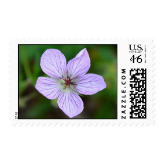 White and Pink Wildflower in the Mountains stamp