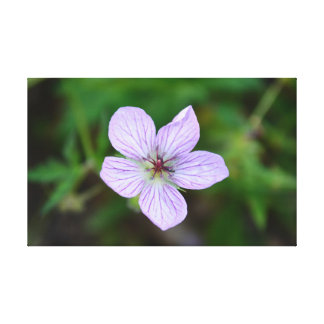 White and Pink Wildflower in the Sandia Mountains Stretched Canvas Prints