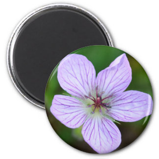 White and Pink Wildflower in the Sandia Mountains Fridge Magnets