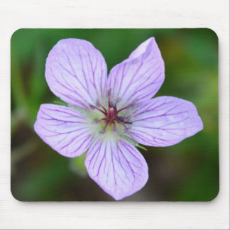 White and Pink Wildflower in the Sandia Mountains Mouse Pad