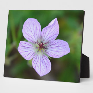 White and Pink Wildflower in the Sandia Mountains Plaque