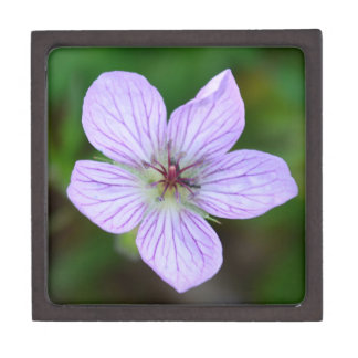 White and Pink Wildflower in the Sandia Mountains Premium Jewelry Boxes