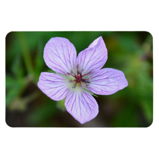 White and Pink Wildflower in the Sandia Mountains Rectangle Magnet