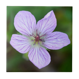 White and Pink Wildflower in the Sandia Mountains Ceramic Tile