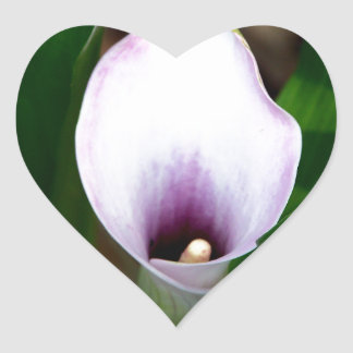 White and Purple Calla Lily Heart Sticker