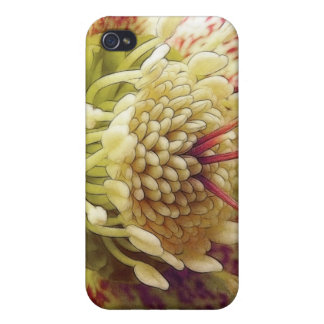 White And Purple Hellebore iPhone 4 Case
