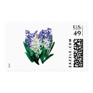 White and Purple Hyacinths Postage