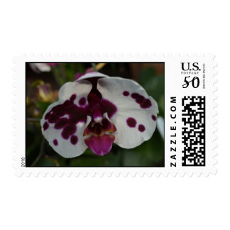 White and Purple Orchid Postage Stamp