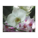 White and Purple Orchids Canvas Print
