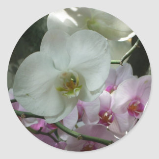 White and Purple Orchids Classic Round Sticker