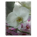 White and Purple Orchids Notebook