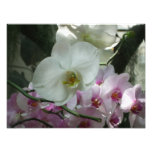 White and Purple Orchids Photo Print