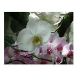 White and Purple Orchids Postcard