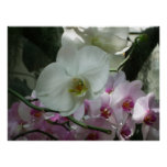 White and Purple Orchids Poster