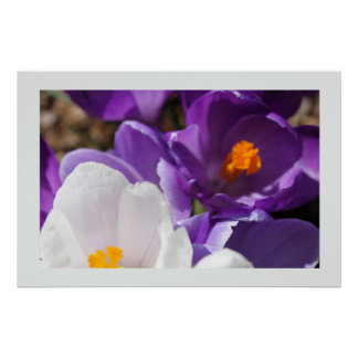 White and Purple Spring Flowers Print