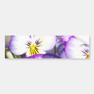 White and Purple Violas Bumper Stickers