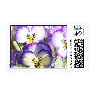 White and Purple Violas Postage Stamp