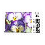 White and Purple Violas Postage Stamp