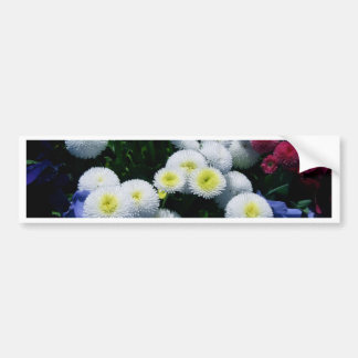 White and Red Chrysanthemums Bumper Sticker