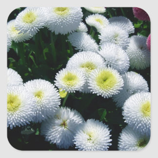 White and Red Chrysanthemums Square Sticker