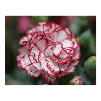 White and red flower postcard