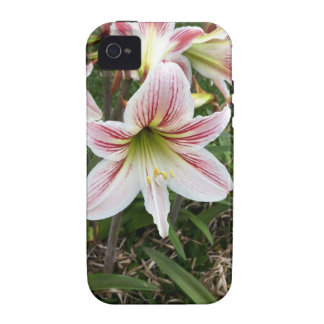 White and Red Lily iPhone 4/4S Cases