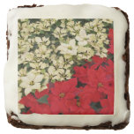White and Red Poinsettias I Holiday Floral Brownie