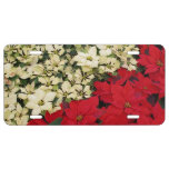 White and Red Poinsettias I Holiday Floral License Plate