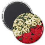 White and Red Poinsettias I Holiday Floral Magnet