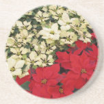 White and Red Poinsettias I Holiday Floral Sandstone Coaster