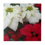 White and Red Poinsettias II Christmas Holiday Ceramic Tile